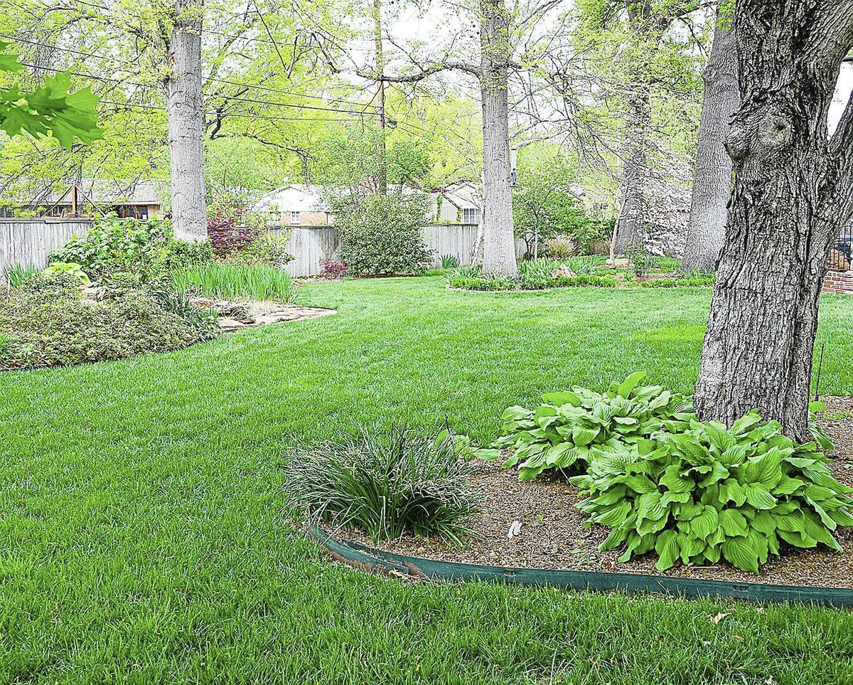 Master gardener shade tolerant grasses let your lawn get for Tall ornamental grasses that grow in shade