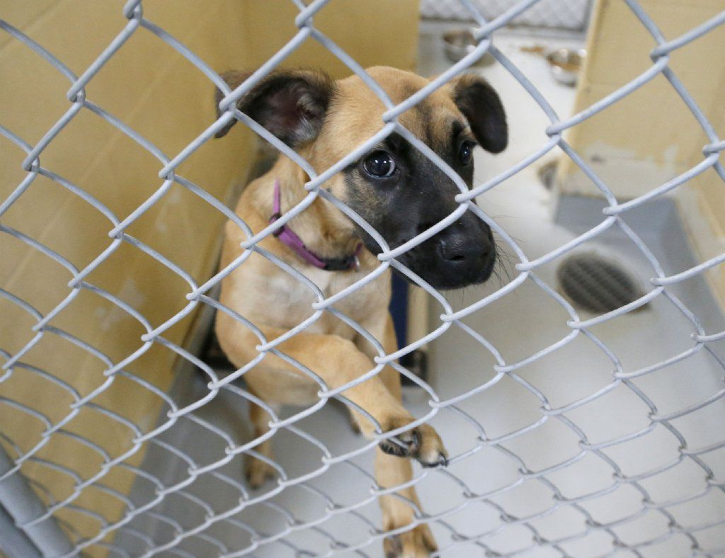 Tulsa animal shelter dog