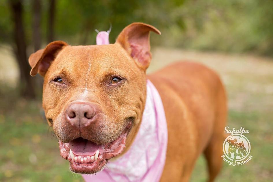 6b18e3e529b227 » Pawsitively adorable: 38 cats and dogs looking for love – Tulsa WorldThe  Doggy Blogger
