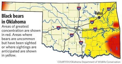 I 40 Oklahoma Map.Young Black Bear Hit On I 40 Near Roland As Sightings Increase