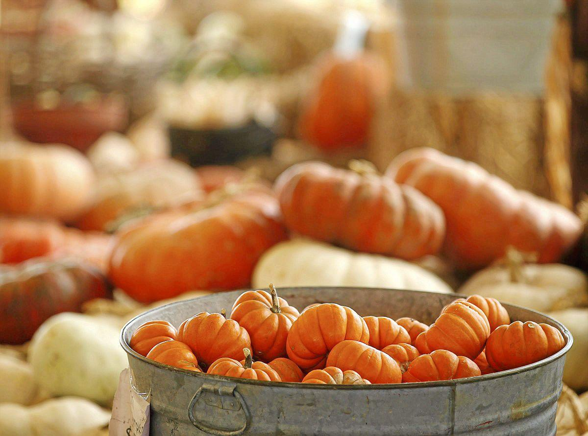 Buy Here Pay Here Okc >> Find Tulsa's best variety of pumpkins and pumpkin patch activities | Slideshows | tulsaworld.com