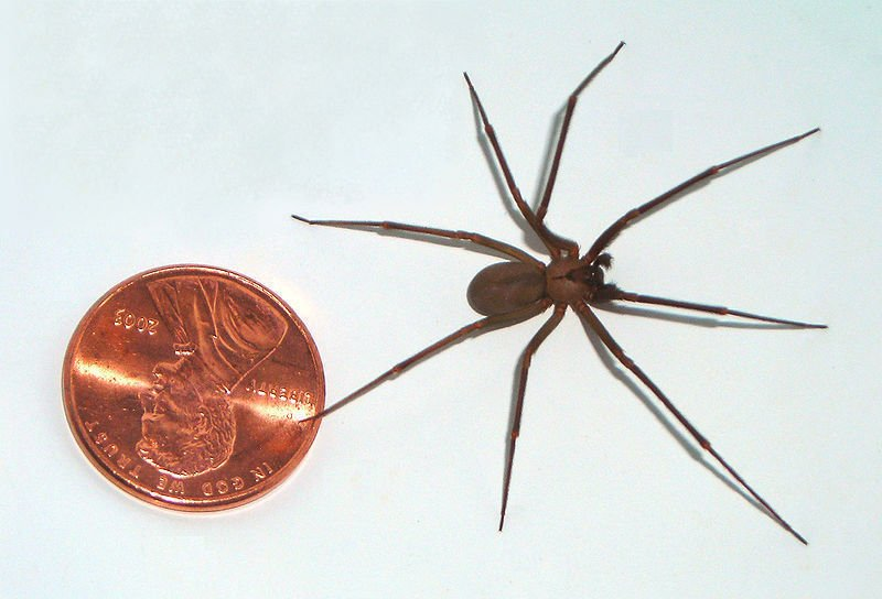 The 14 most dangerous (and some deadly!) critters in