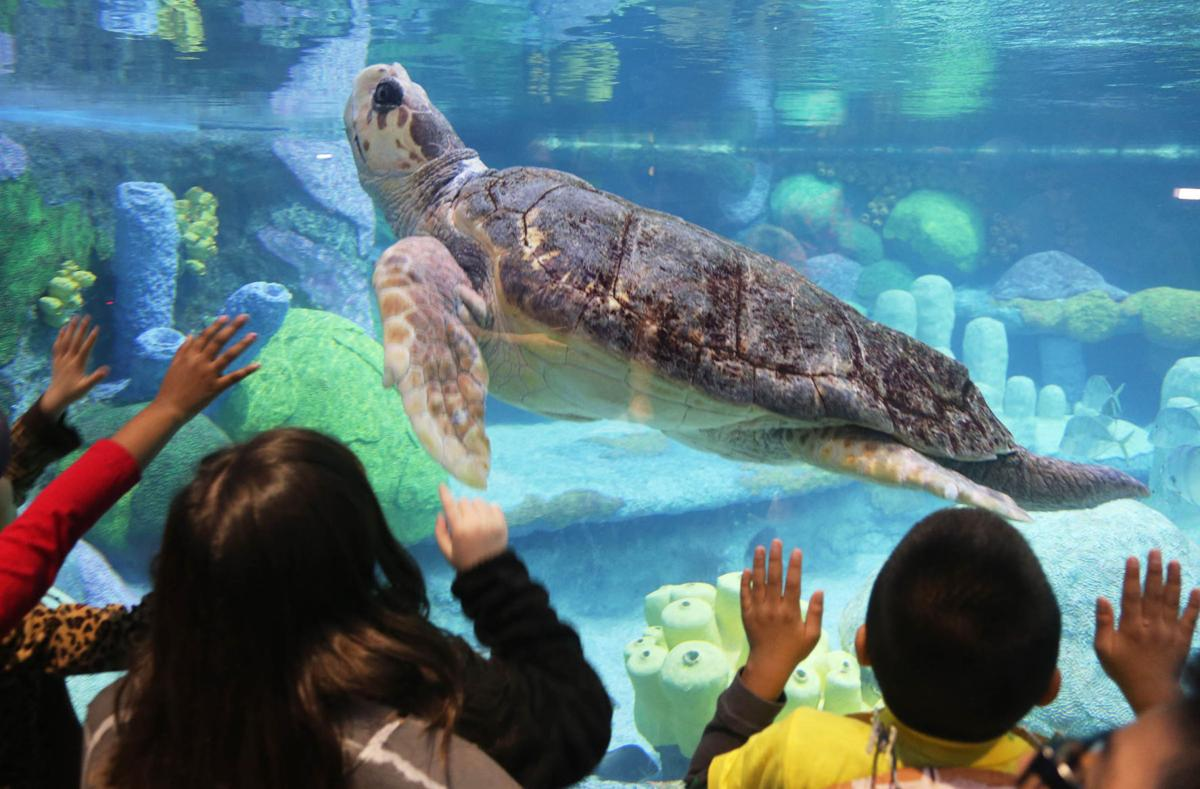 Vote clears path for Jenks city manager to fire aquarium ...