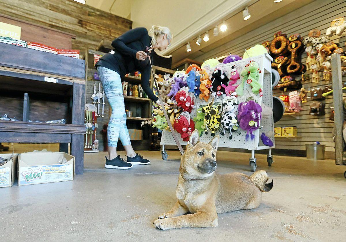 Take a bow wow: Tulsa recognized for pet-friendly ways with No  6