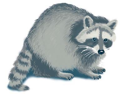 San Francisco carpenter loses job over raccoon's freedom