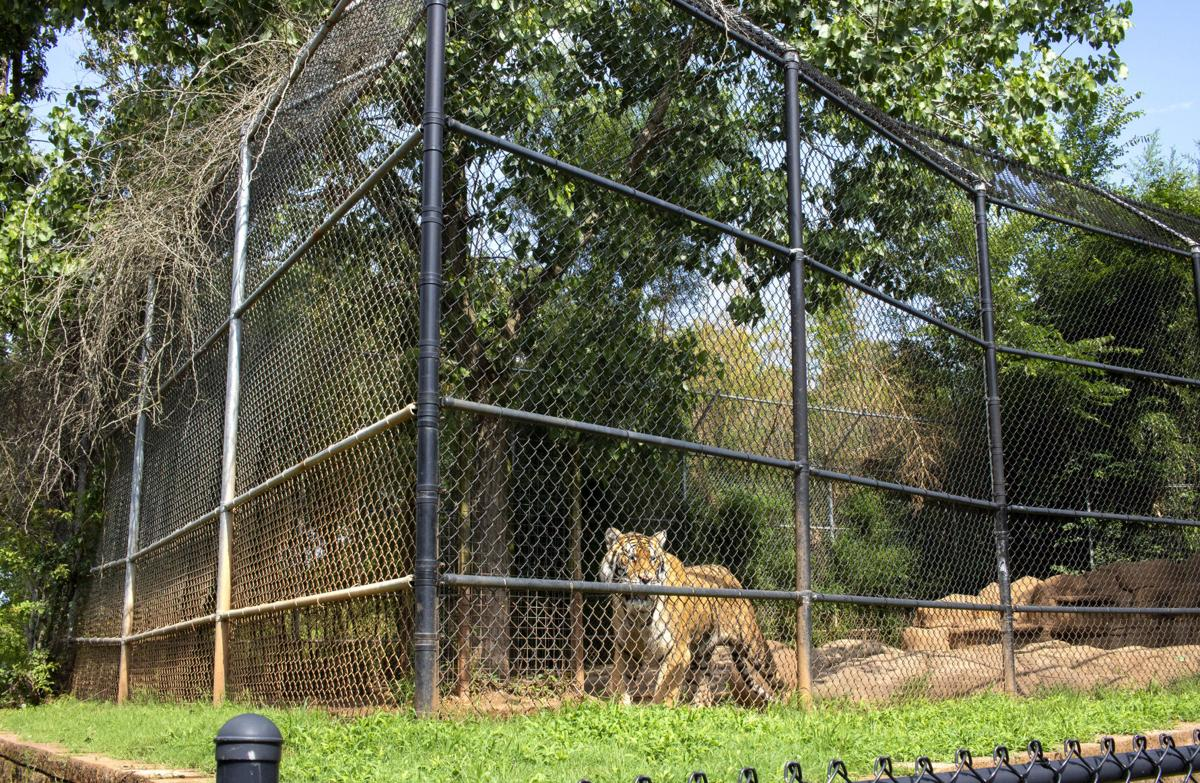 Tiger Creek Animal Sanctuary