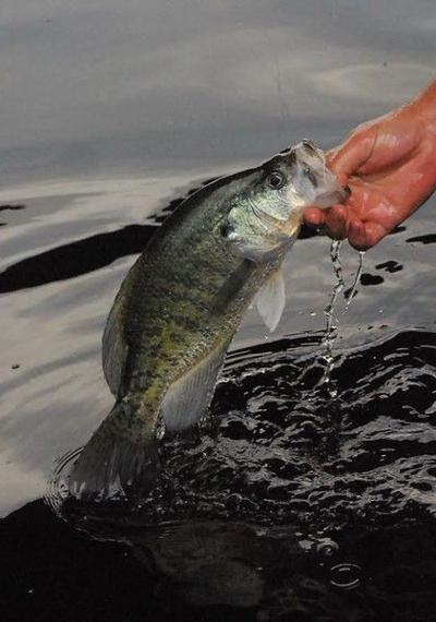 Fish's habits provide the perfect catch in winter