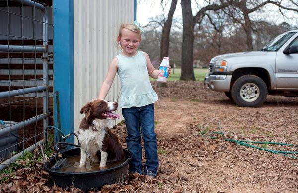 Pack of border collies keep East Texas farm running