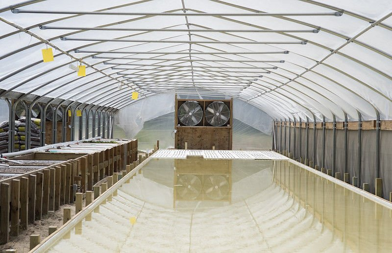 East Texas Aquaponics grows organic produce using non