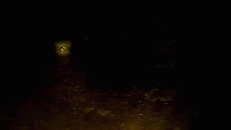 Spotlight counts help deer hunters get look at numbers, ratios