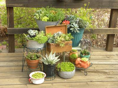 Gardeners can find great variety of succulents