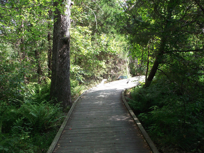 Nature Trail: Plant, animal life on display at wetlands trail