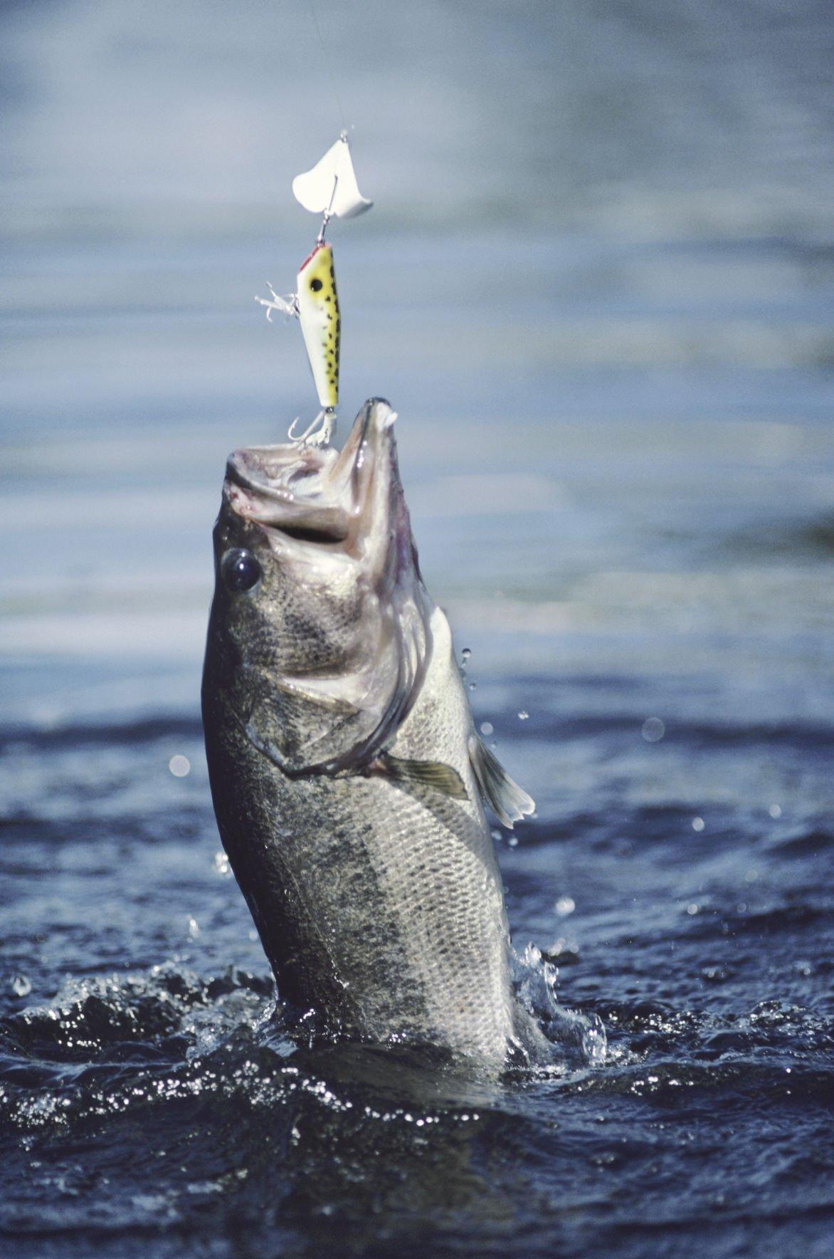 "20/"" Clear Green Chartreuse Umbrella Rig// Striper Fishing Lures//"