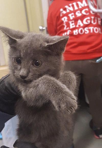 Kitten walking on highway rescued after traffic is shut down