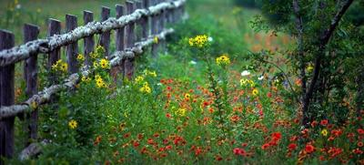 Wildflowers and blooming plants on full display at Texas State Parks
