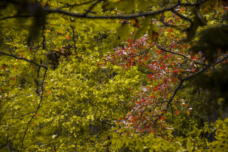 Spectacular fall colors start to emerge as foliage season opens in East Texas