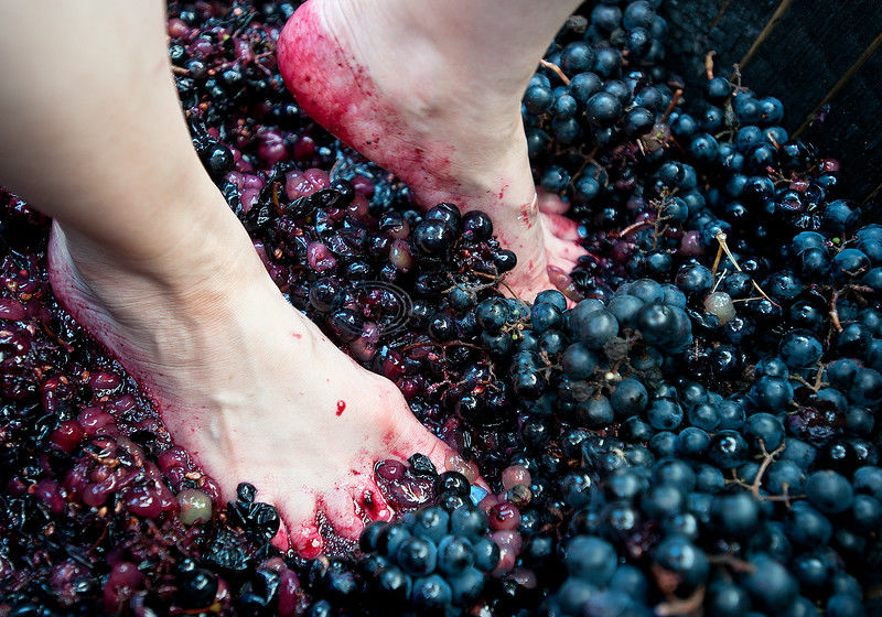 PHOTOS: Purple Passion - 2nd Annual Grape Stomp benefits volunteer firefighters