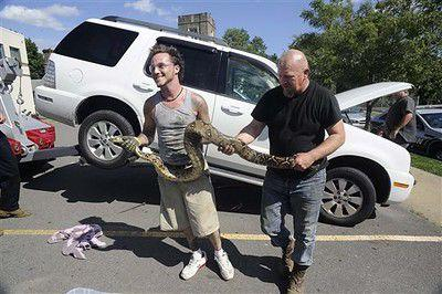 Boa constrictor pulled from beneath SUV in Pennsylvania