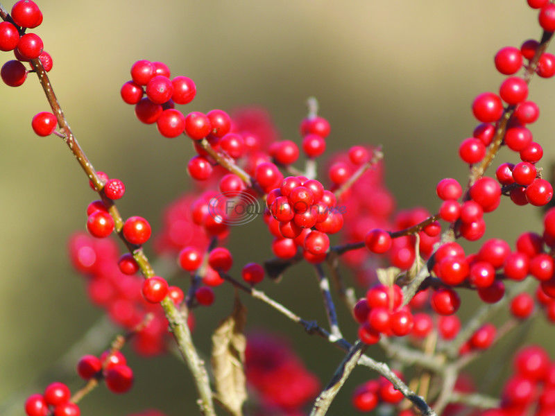 Good plant selection can make winter landscape exciting