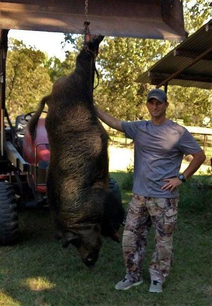 Union Grove man bags monster 416-pound feral hog