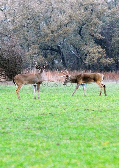 Big Buck, TBGA scoring day Jan. 23 at The Nature Center