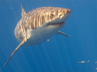 Texas ban on buying or selling shark fins goes into effect - just in time for 'Shark Week'