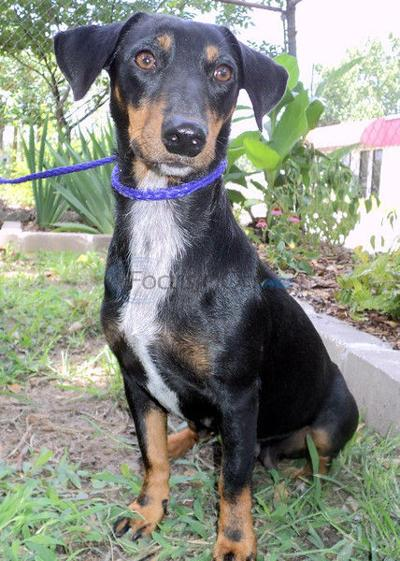 Bitsy is in need of a forever home