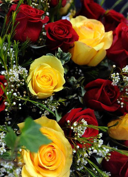 Tyler Blossoms: Rose Sunday kicks off blooming season