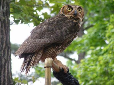 Birds of Prey coming to Lake Livingston State Park