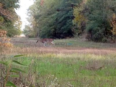The Hunt Is On: Sometimes Just A Glimpse Of A Deer Starts The Chase