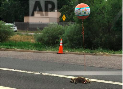 "Dead raccoon wears ""Get Well Soon"" balloon"