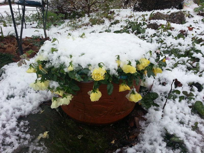 Prepare garden soil for late winter, early spring planting