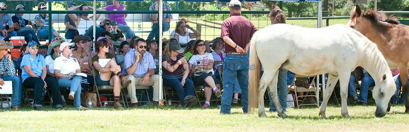 Training helps more learn to use horses in therapy