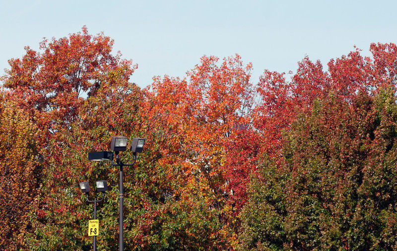 Autumn Light: Tyler Paper Photographers Capture Fall Foliage