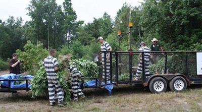 East Texas marijuana fields valued at $175 million
