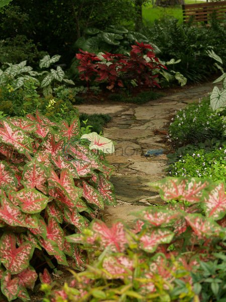 Summer time to prepare for fall garden, ramp up lawn care