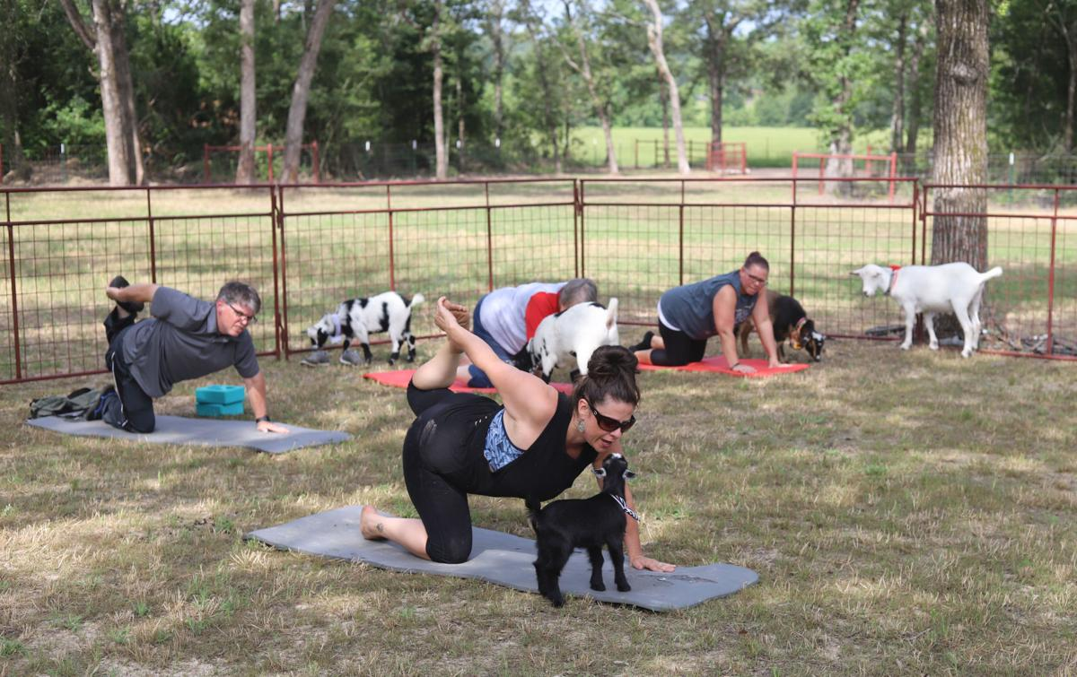 Goat Yoga at Oh My Goat (5).JPG