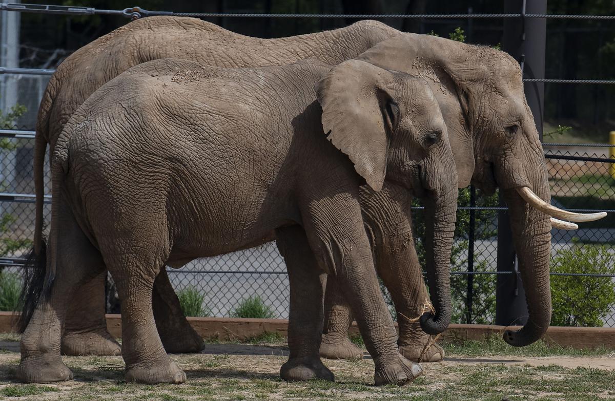 20190416_New_Elephants_Zoo_01web.jpg