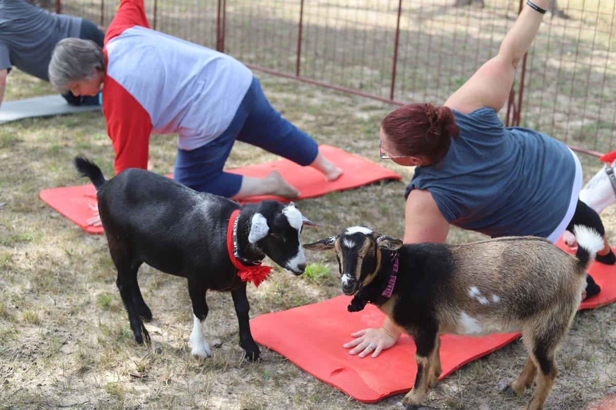 Goat Yoga at Oh My Goat (6).JPG