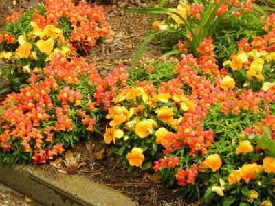 After winter, color coming back to gardens