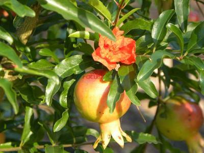 Favorite shrubs of the IDEA Garden