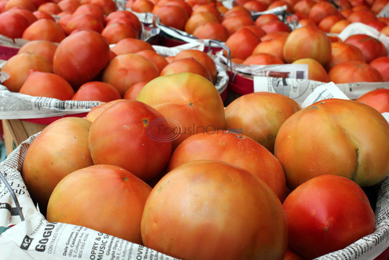 Tasty tomatoes everywhere at TomatoFest