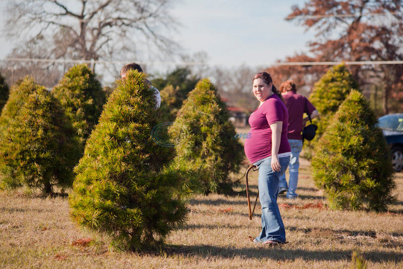 how to start a christmas tree farm in texas