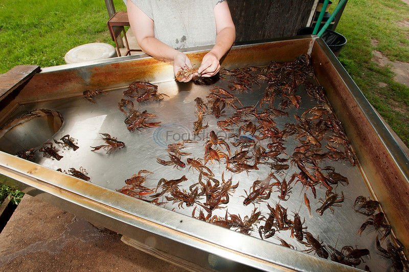 Crawfish Tales: Life on the creek