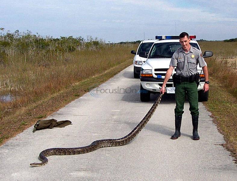 Mass. officials search for fugitive snake