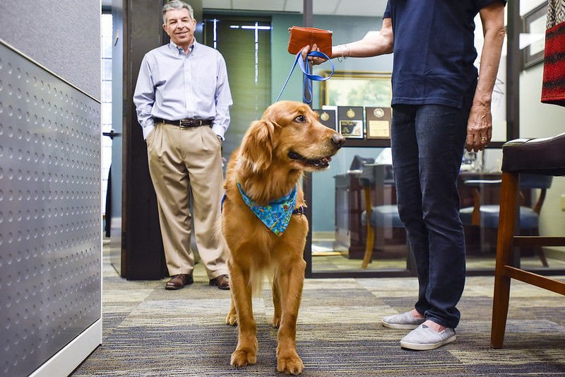 Therapets help relieve stress at local accounting firm on Tuesday