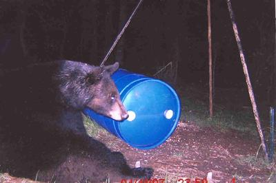 East Texas bear sightings up, hunters, landowners advised to be on lookout