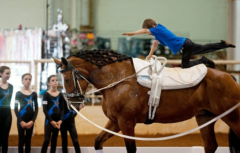 Thrill Ride: Horse vaulting combines dance and gymnastics