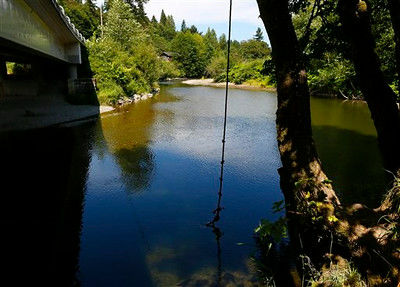 Otter suspected in Pilchuck River attack spotted