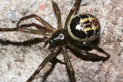 Biting spiders force UK school closure
